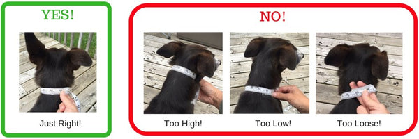 SnazzyPupper measurement guide