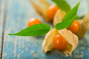 Ingredient Spotlight: Ashwagandha