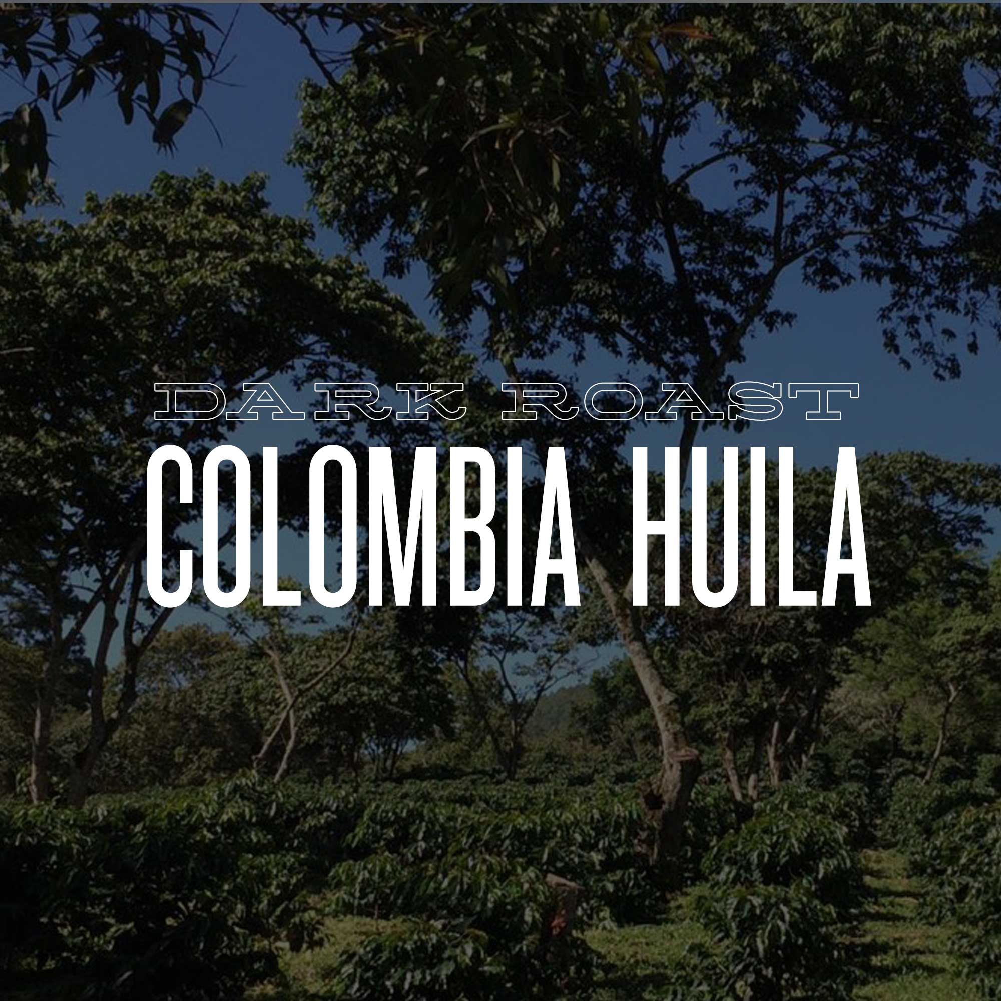 DARK ROAST COLOMBIA HUILA EL TIPLE