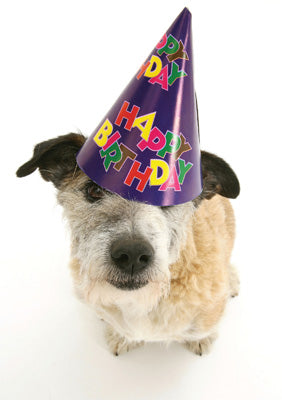 57AP16 - Happy Birthday (Dog in Hat) Greeting Card