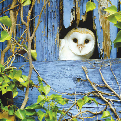 L103 - The Barn Owl Greeting Card