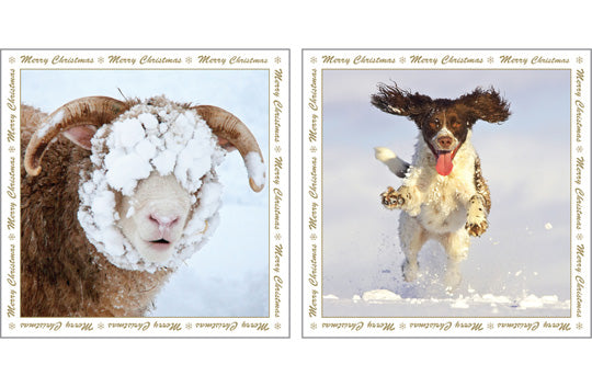 NC-XM519 - Sheep and Dog in Snow Christmas Notecard Pack (6 cards)