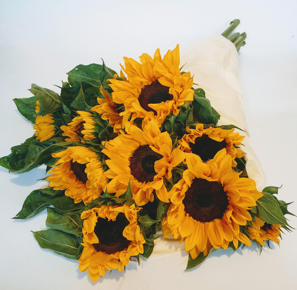 Sun Orange Sunflowers