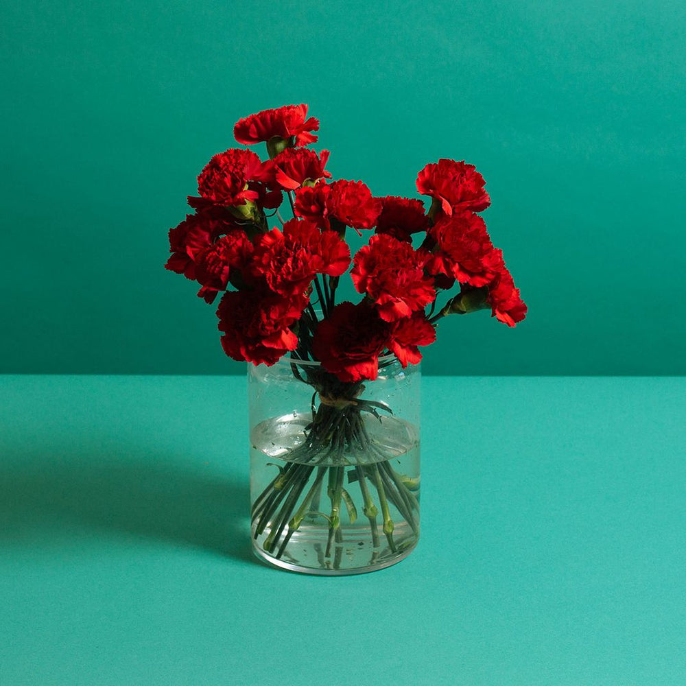 Hot Red Carnations