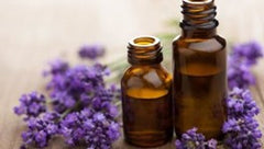 lavender with bottles photo