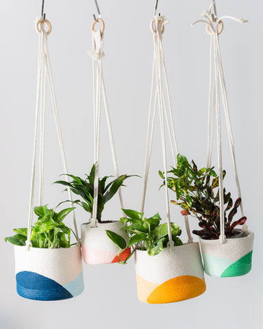 Hanging Planters from Closed Mondays