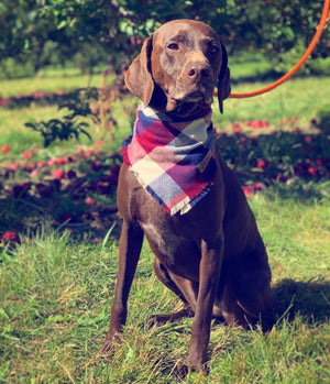 Cabernet Country Dog Bandana