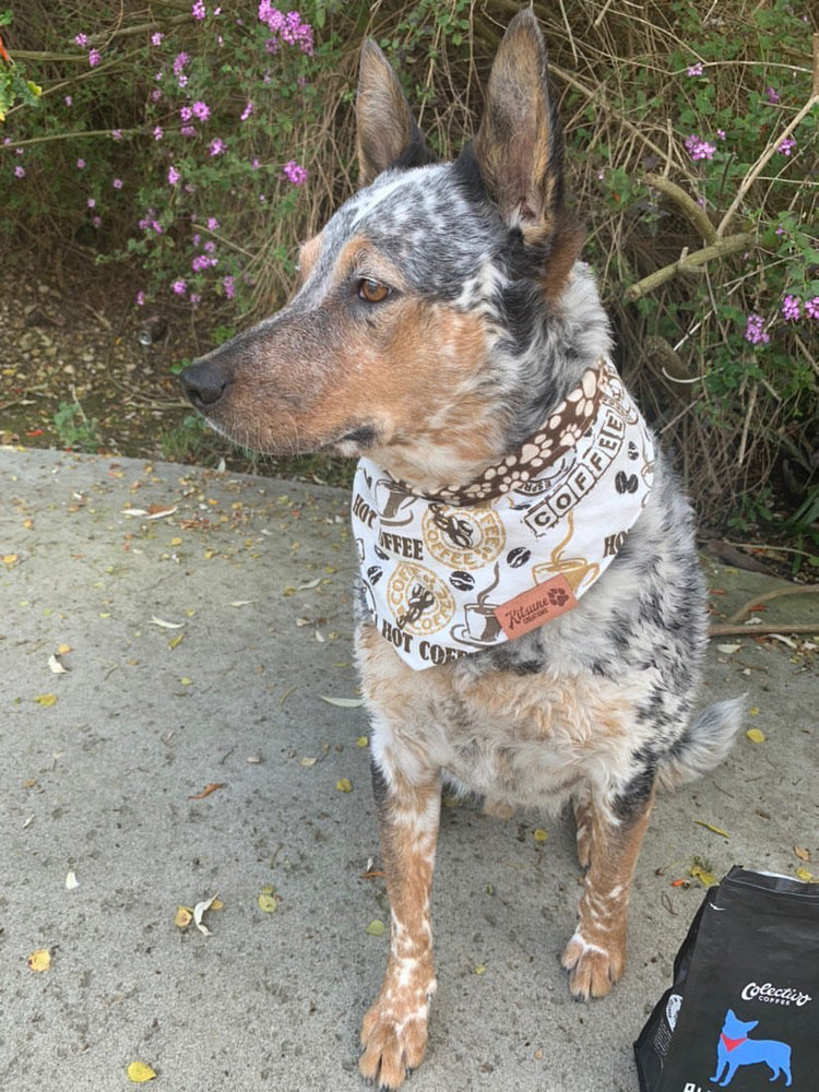 Coffee Lover Dog Bandana