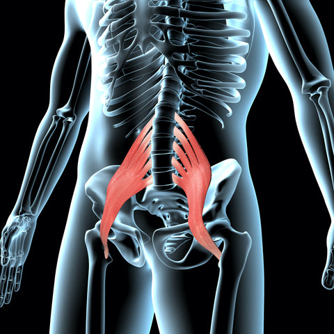 Psoas Anatomy for QL Claw Release