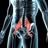 Psoas Muscle Release Tool