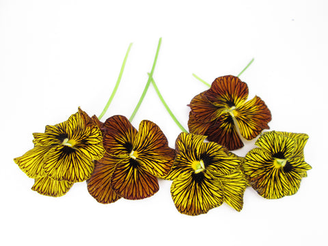 Pansies Striped Row card