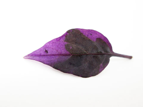 Purple Leaf card