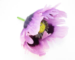 Purple Poppy card