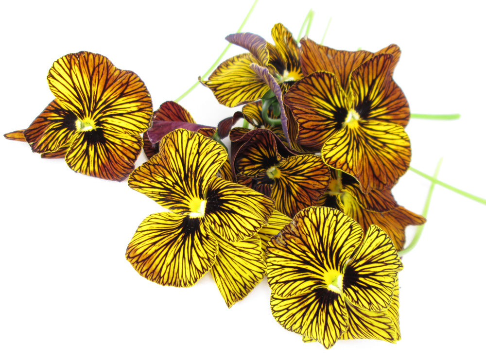 Pansy Huddle