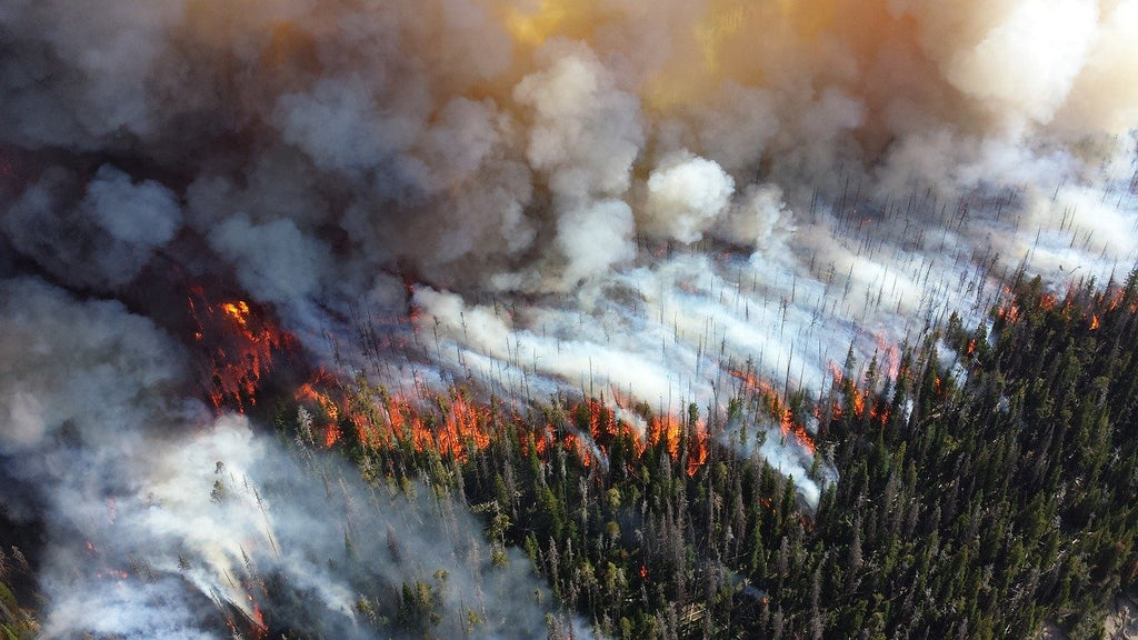 causes of wildfires