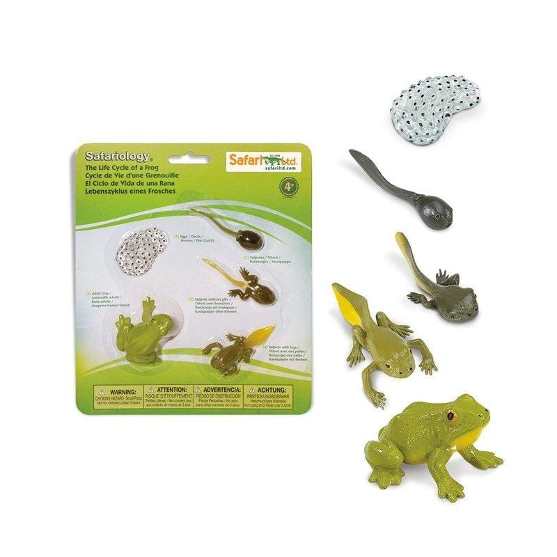 Life Cycle of a Frog - The Montessori Room Safari Ltd.