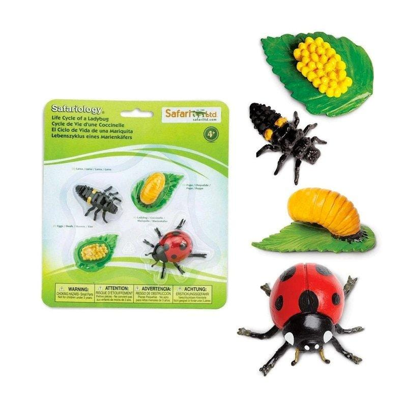 Life Cycle of a Ladybug - The Montessori Room- Safari Ltd