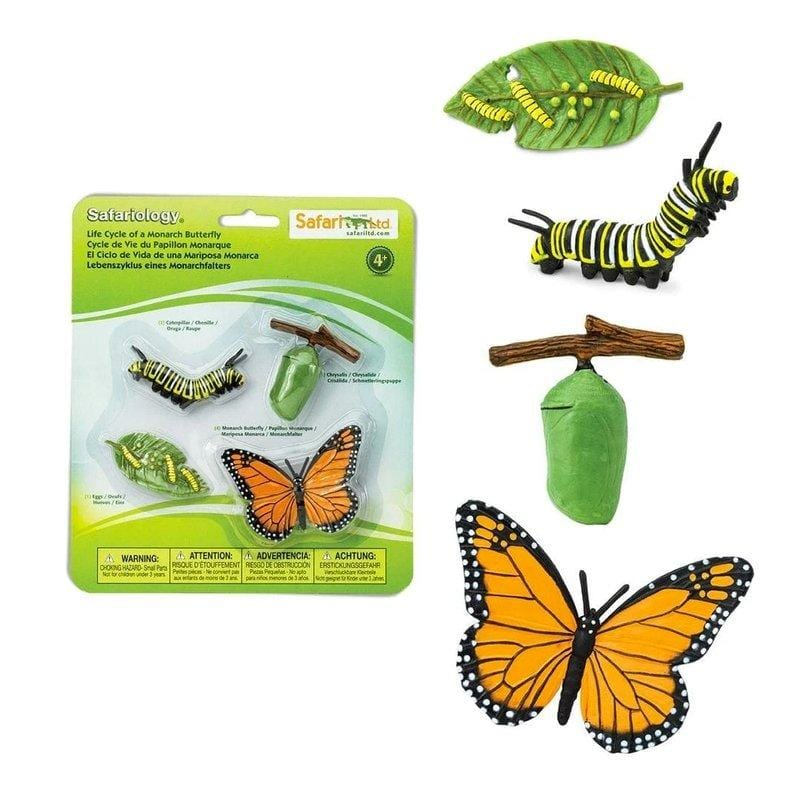 Life Cycle Of A Monarch Butterfly - The Montessori Room - Safari Ltd Toys