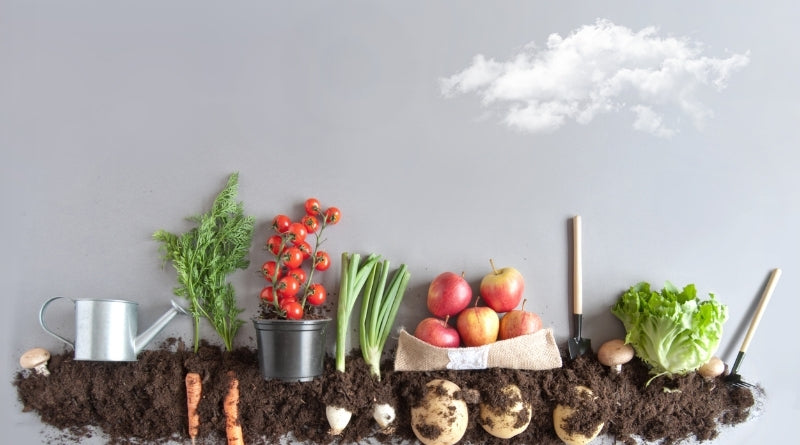 Composting - Learn with Clan Earth
