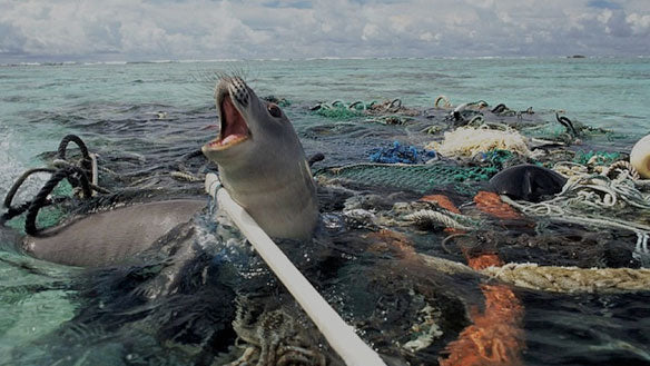 Trapped seal plastic pollution ocean