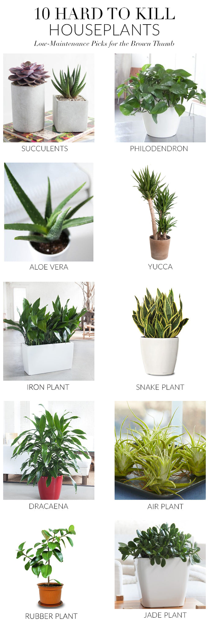 Stylish easy care house plants and how to keep them alive for Easy to keep garden plants