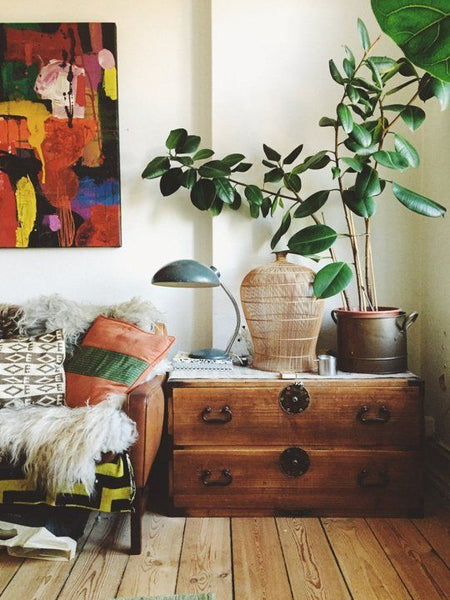 House plant in bohemian interior