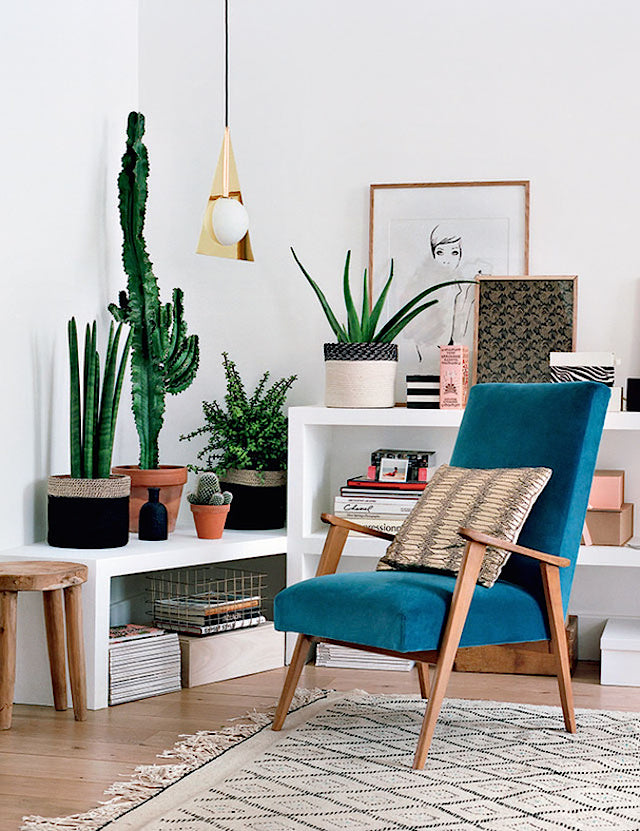 cacti in a nice interior with blue chair