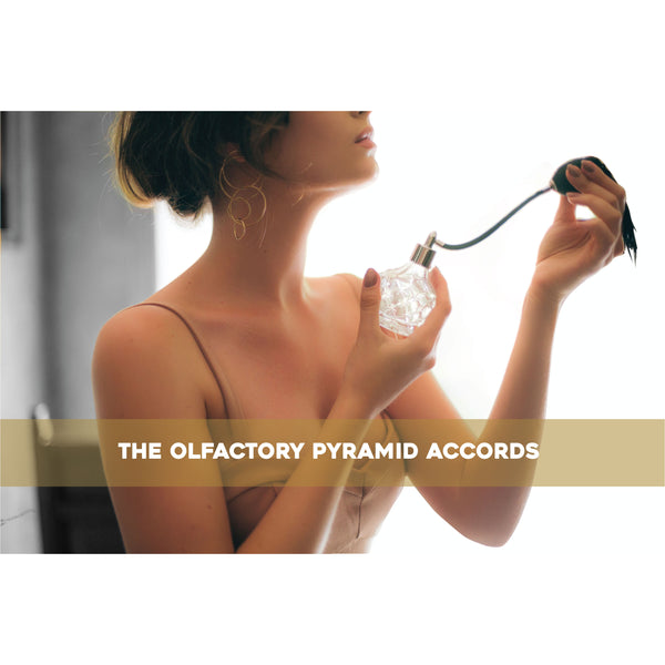 The olfactory pyramid accords