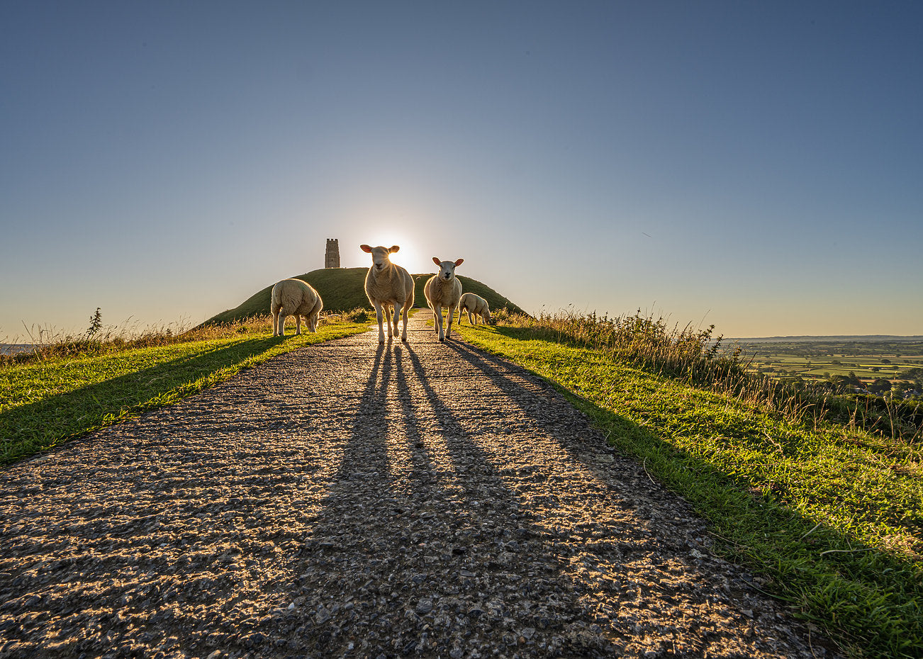 Glastonbury Tor Canvas ~ Photobomb