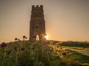 Glastonbury Tor Canvas ~ Thistles on the Tor