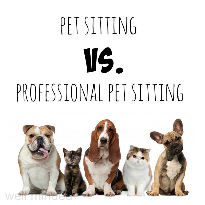 What to look for when looking for a pet professional