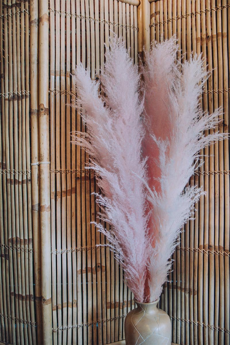 pink pampas grass from Frivolous  - Vancouver BC