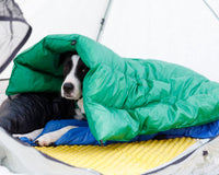 Best Dog Gear from Small and Startup Outdoor Brands