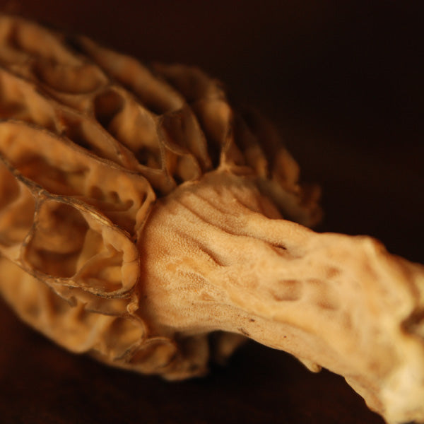 7 Tips for Morel Mushroom Hunting