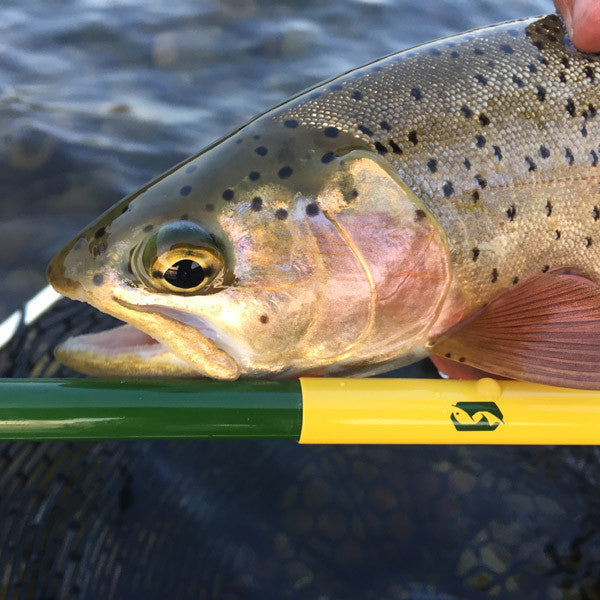 Tenkara Rod Co review: the take from expert guide, total novice