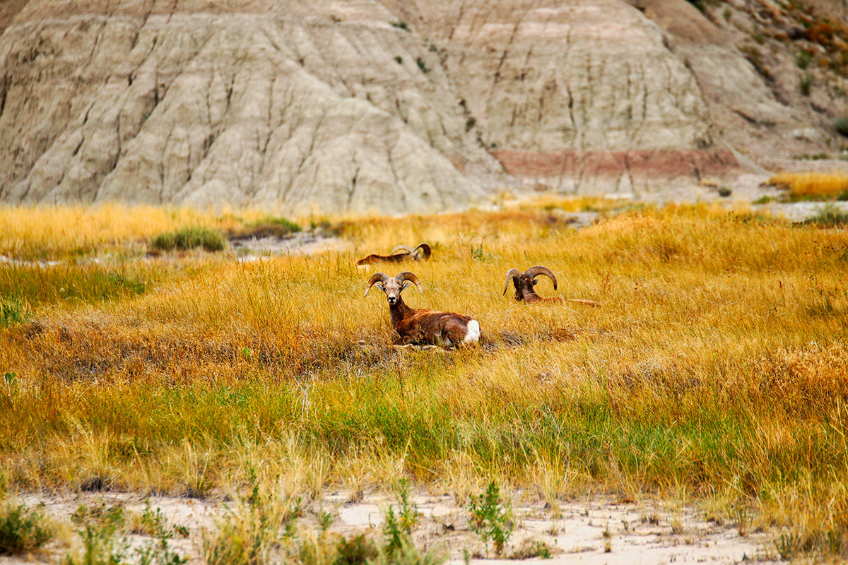 Badlands Lesser Known National Parks Hiking Backpacking Off the Beaten Path Fall