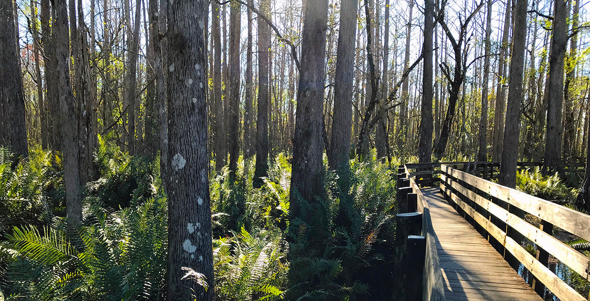 Best Long Trail Shorter Lesser Known Thru-Hikes United States Florida