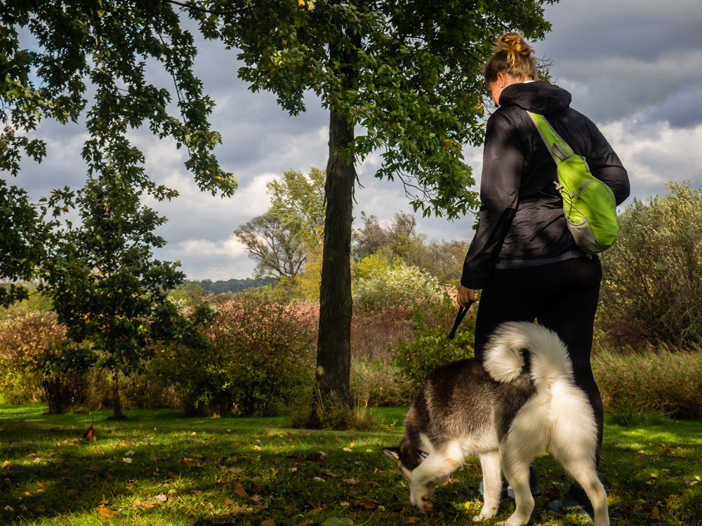 RAD Dog Release N Run Review Collar with Built-In Retractable Leash