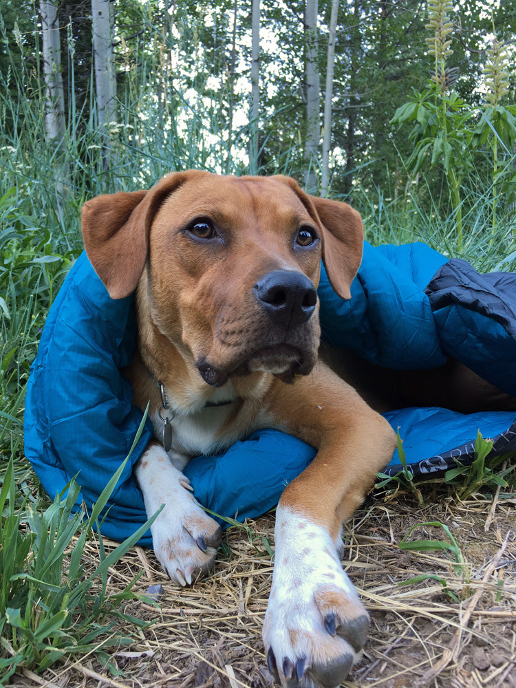 Whyld River DoggyBag Review - High Quality Dog Sleeping Bag - Copyright Garage Grown Gear