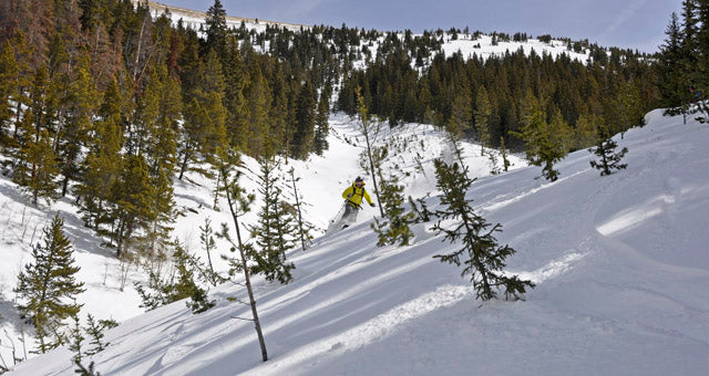 Skiing through tree flagging at the bottom of the Sky Chutes in Summit County Coloroado