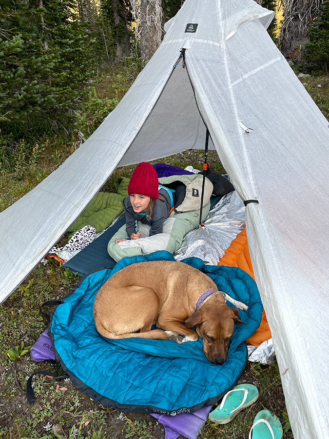 things to consider hiking with dogs backcountry