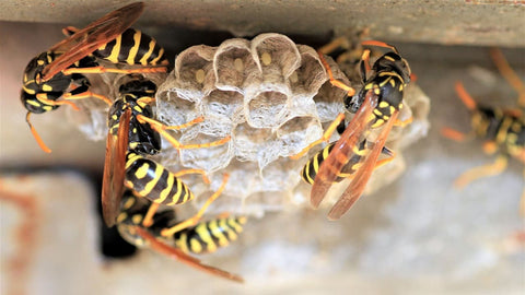 Bees creating hive in a home's gutter