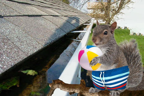 Squirrel with clothes having fun on a roof's gutter