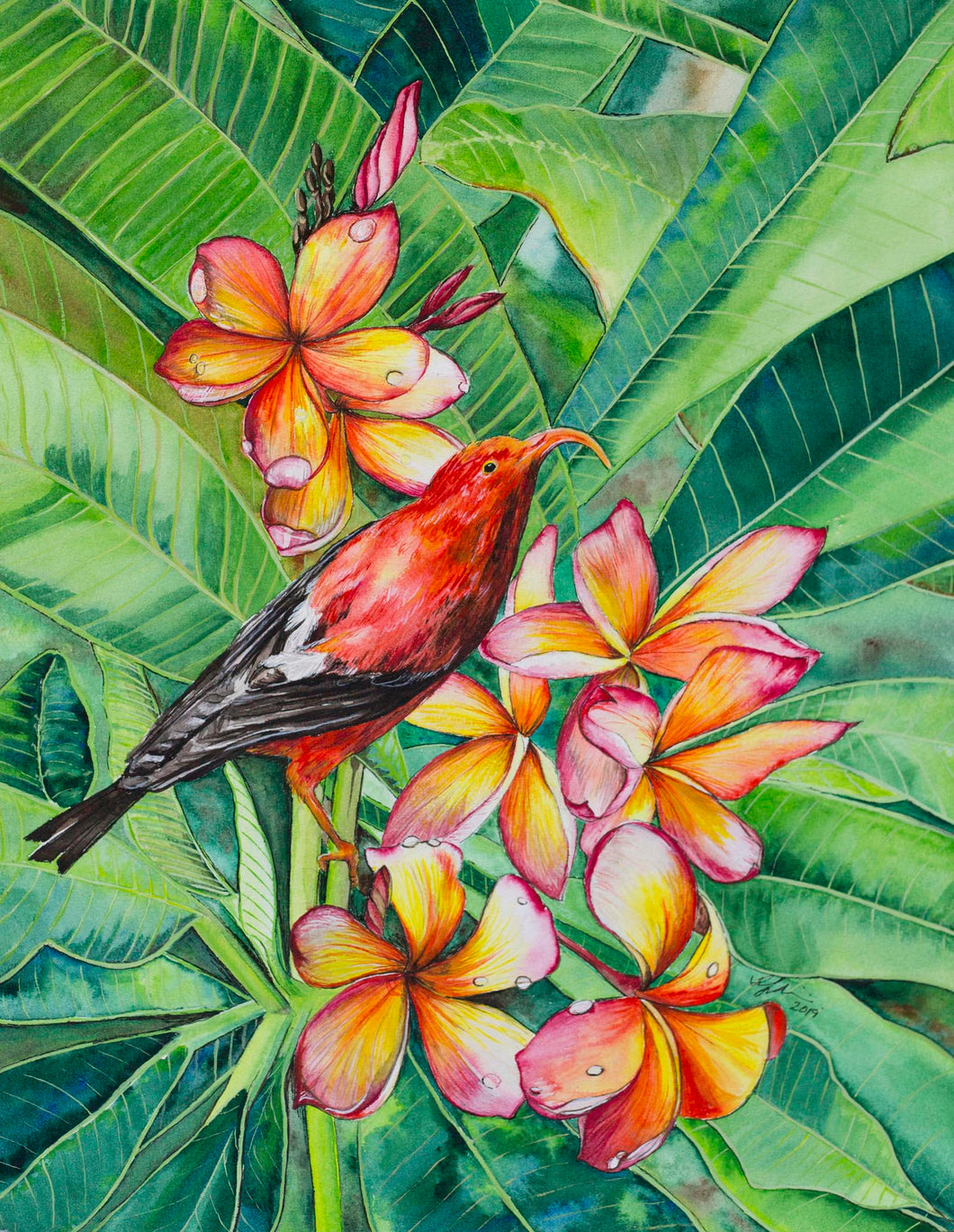 Honeycreeper and Plumeria Print