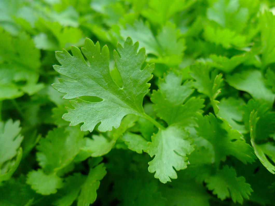 Parsley 4