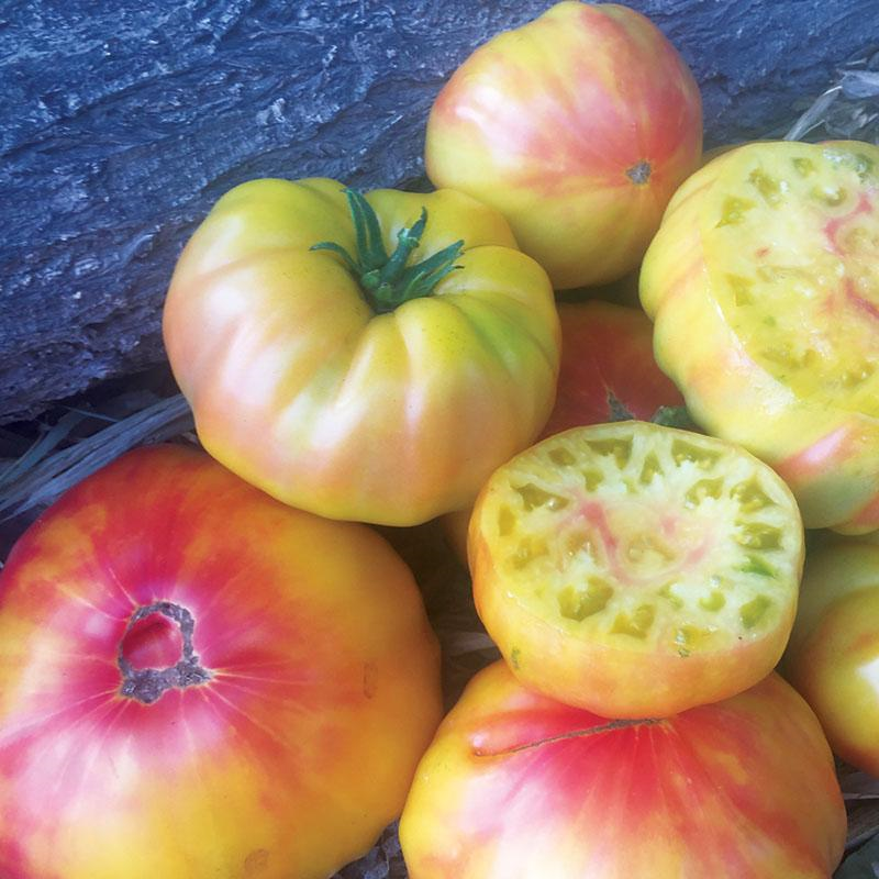 Striped German Tomato 3