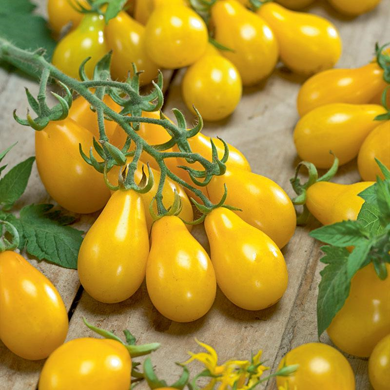 Yellow Pear Tomato 3