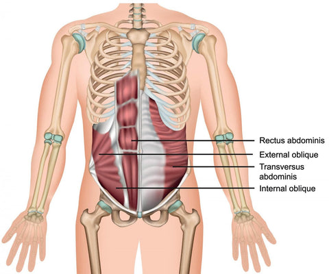 muscles that make up the core