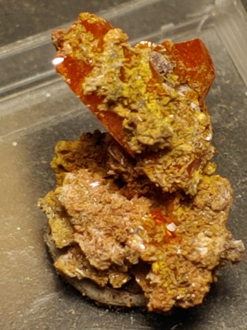 Wulfenite from Red Cloud Mine, Arizona.  2 cm #5253
