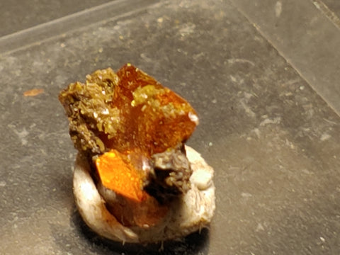 Wulfenite from Red Cloud Mine, Arizona.  1 cm #5262